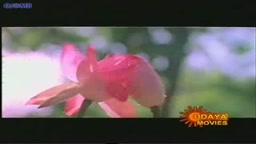 Kausalya in wet song